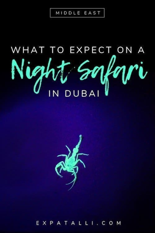 "Pinterest image of a scorpion on a Dubai night safari, with text: ""What to expect on a night safari in Dubai"""