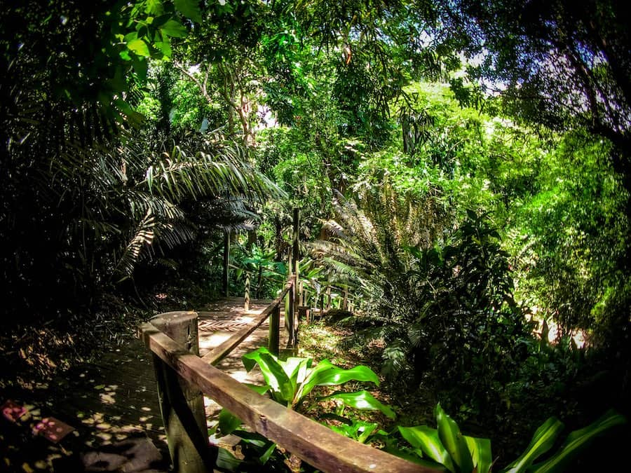 Wooden boardwalk in Fiji's Garden of the Sleeping Giant | Image © ExpatAlli.com