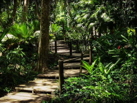 Pathway through Fiji's Garden of the Sleeping Giant | Image © ExpatAlli.com