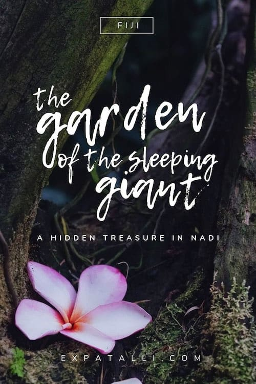 "Pinterest image of a flower sitting at the base of a tree with text: ""the Garden of the Sleeping Giant, a hidden treasure in Fiji"""
