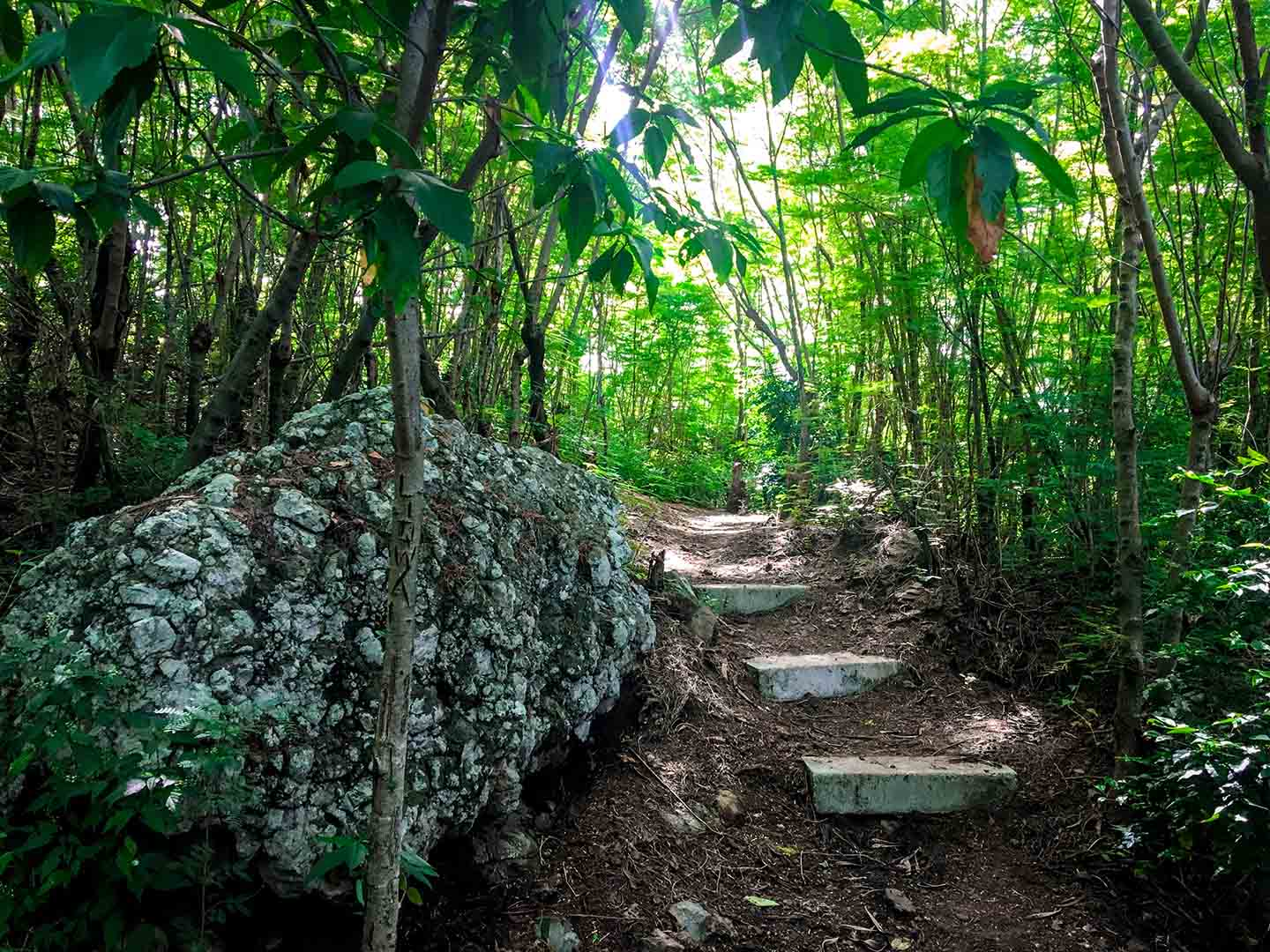 Rainforest Trail at Barefoot Kuata | Image © ExpatAlli.com