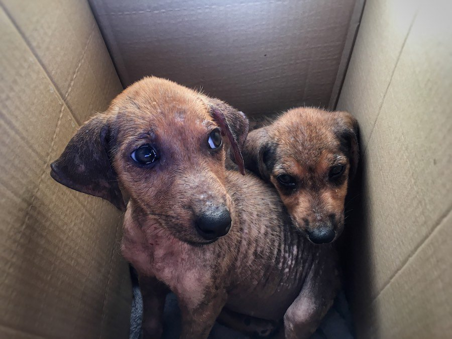 Stray puppies in Fiji | Image © ExpatAlli.com
