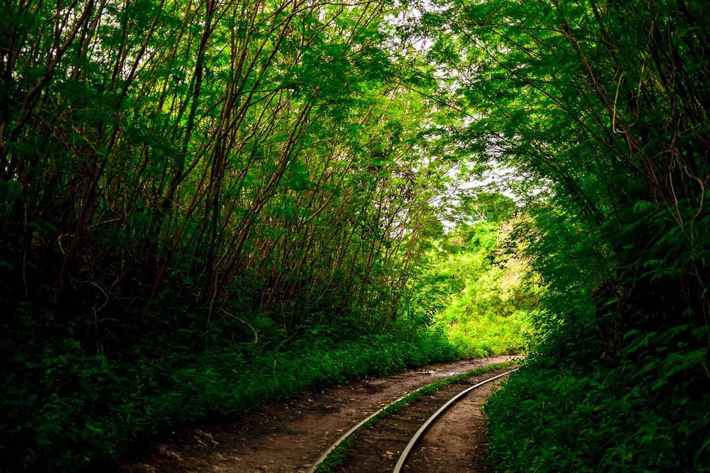 Curved track through the forest