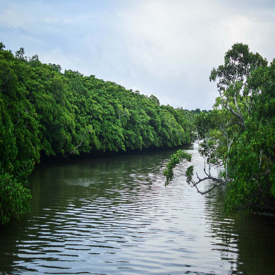 View of a Fiji river on an Ecotrax tour