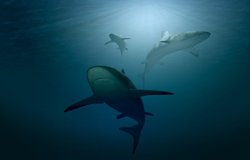 Photo pf sharks swimming in the ocean